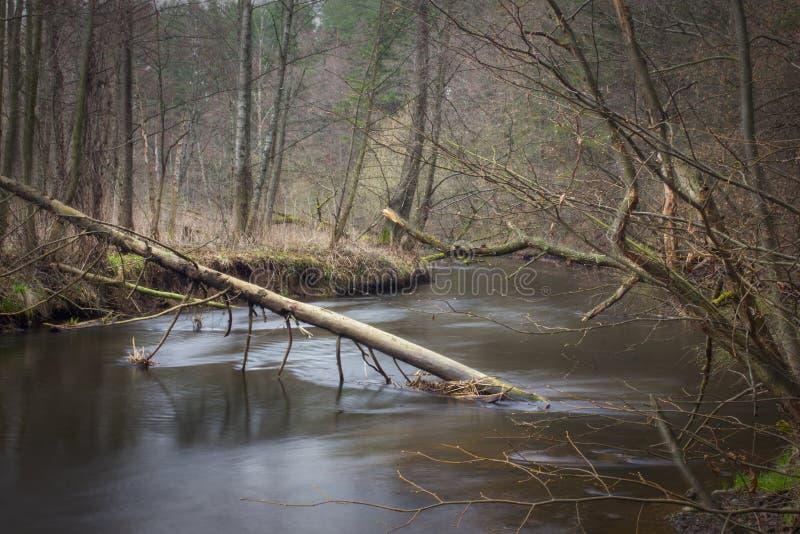 Ландшафт реки в древесине стоковые фотографии rf