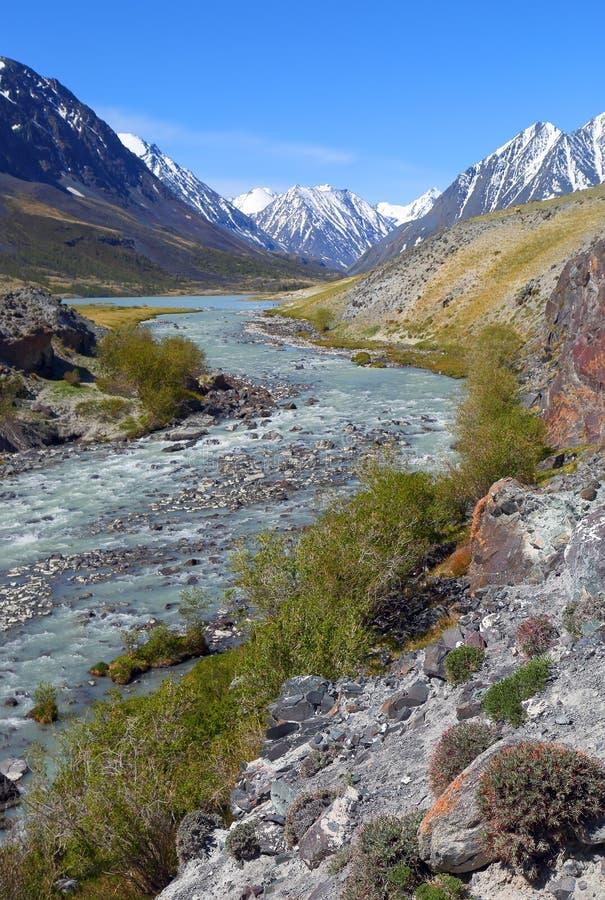 Ландшафт реки горы в Алтай стоковые фото