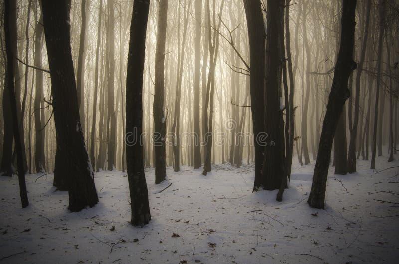 Ландшафт сказки зимы в лесе на Рождество стоковая фотография rf