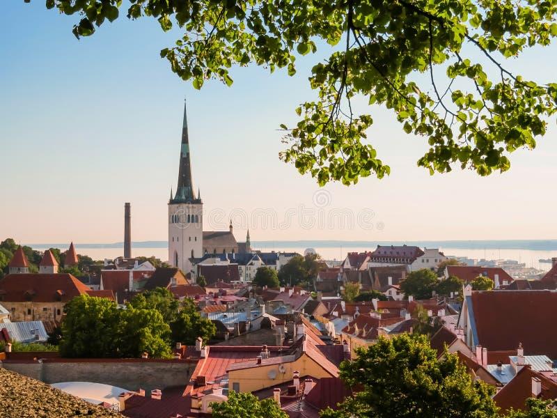 Ландшафт старого городка, Таллина, Эстонии стоковые изображения rf