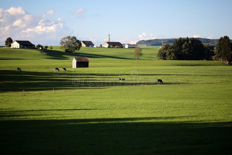 Ландшафт страны с коровами и фермой стоковые фотографии rf