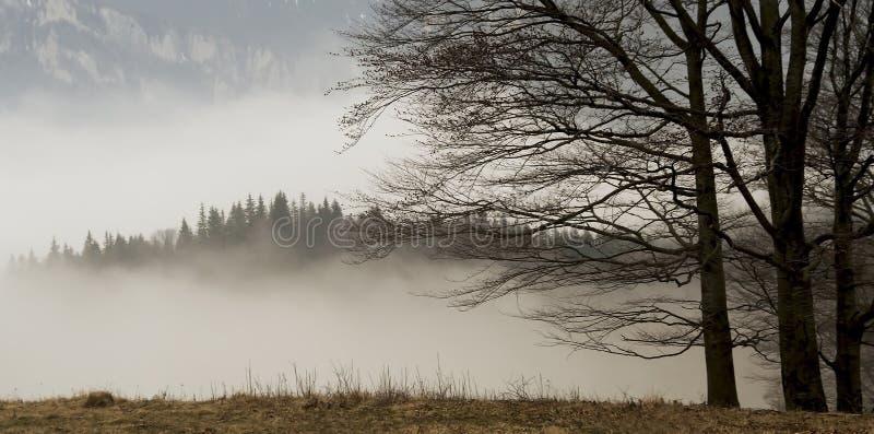 Ландшафт с деревьями и туман покрыли лес стоковое фото rf
