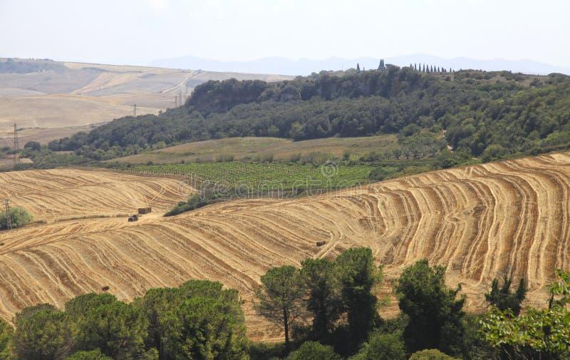 Ландшафт с желтыми полями, Италия Тосканы стоковое фото
