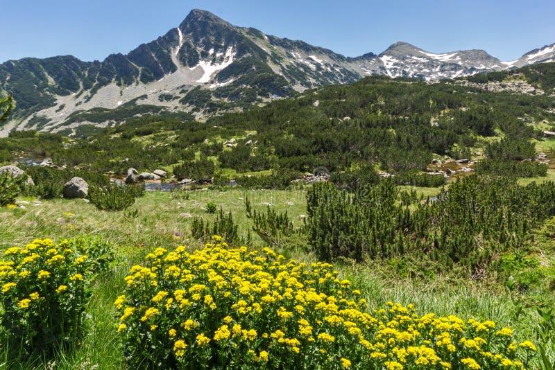 Ландшафт с желтыми цветками весны и Sivrya выступают, гора Pirin стоковые изображения