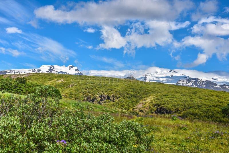 Ландшафт с зеленой травой и снежными горами стоковые изображения