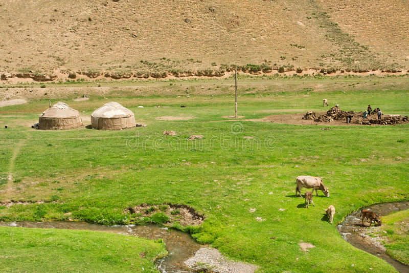 Ландшафт с местной фермой, коровами и центральными азиатскими yurts шатров в долине узкого реки зеленой стоковое изображение rf
