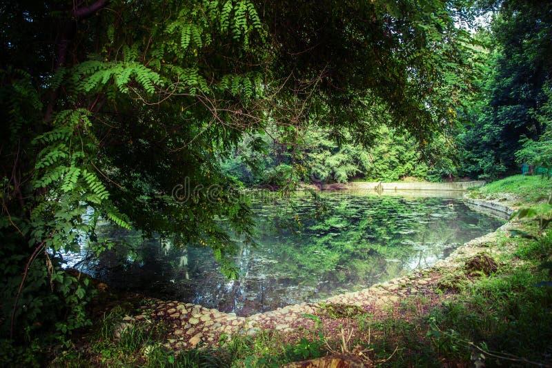 Ландшафт с прудом и деревьями стоковое фото rf