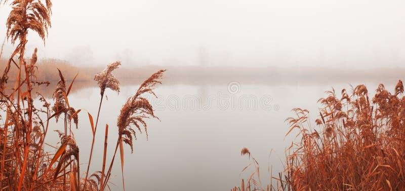 Ландшафт с рекой в тумане стоковое фото rf