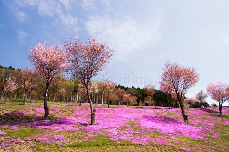 Ландшафт с розовыми цветками на горе стоковое фото rf