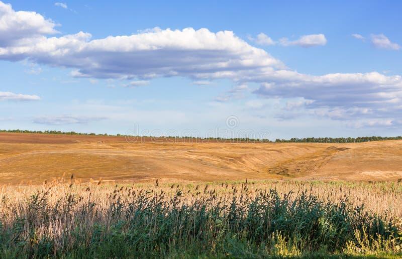 Ландшафт с тростниками стоковые фотографии rf