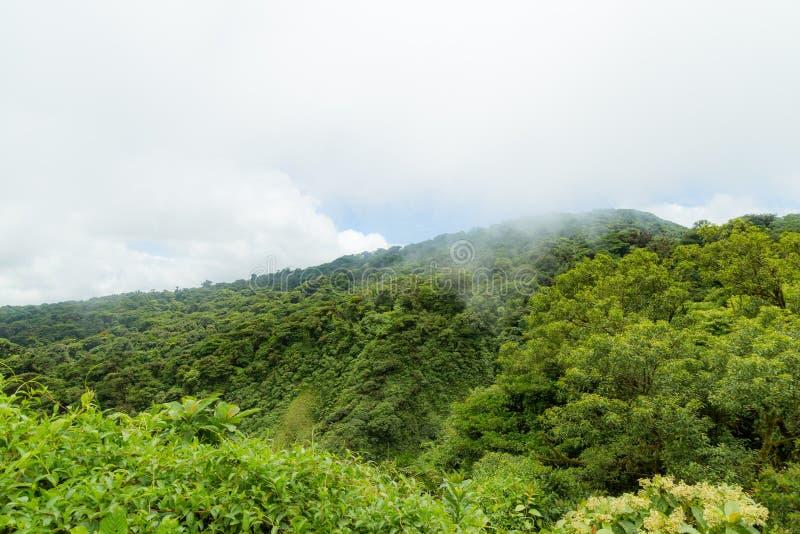 Ландшафт тропического леса в Monteverde Коста-Рика стоковые фотографии rf