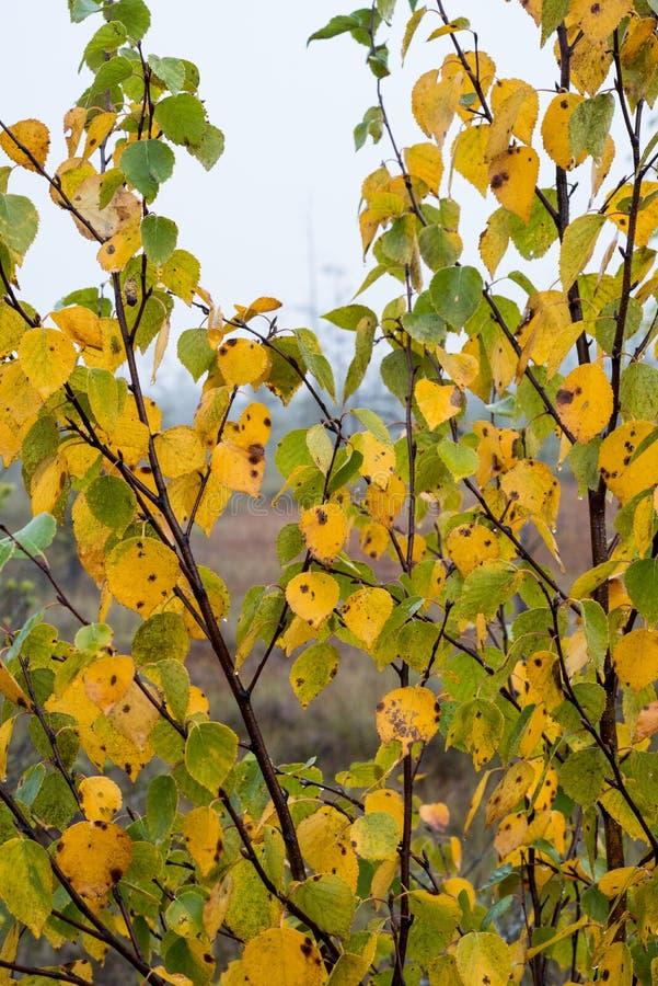 Ландшафт трясины с деревьями в болоте стоковое изображение rf