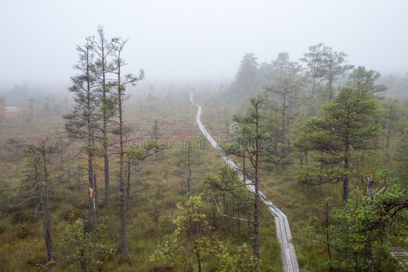 Ландшафт трясины с деревьями в болоте стоковые изображения