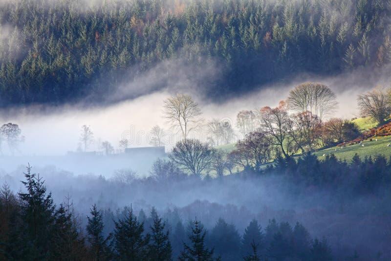 Ландшафт тумана утра стоковые фотографии rf