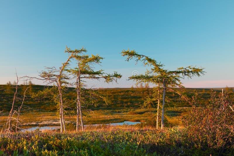 Ландшафт тундры стоковое изображение