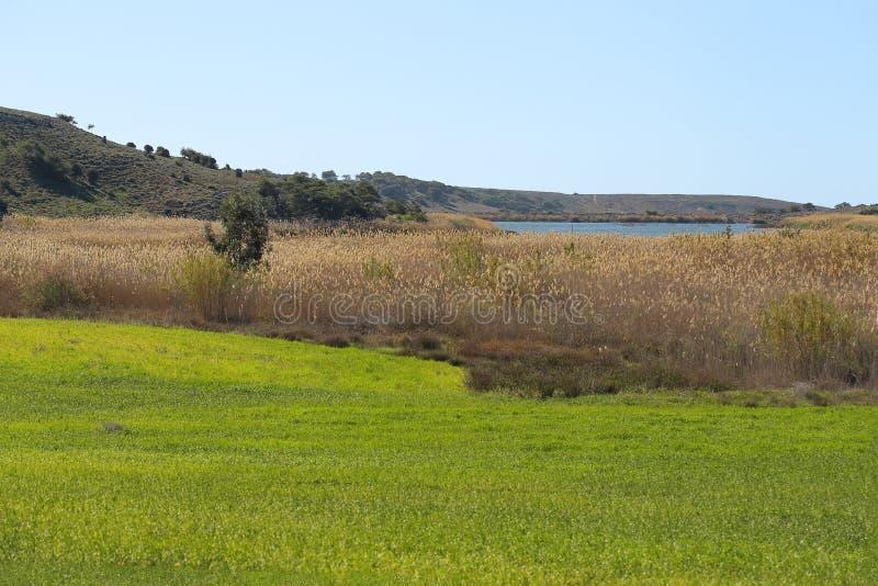Ландшафт луга с деревьями и озером стоковое фото rf