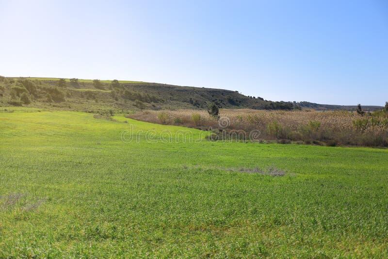 Ландшафт луга с мягким светом стоковое изображение rf