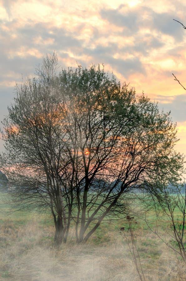 Ландшафт утра весны стоковая фотография rf