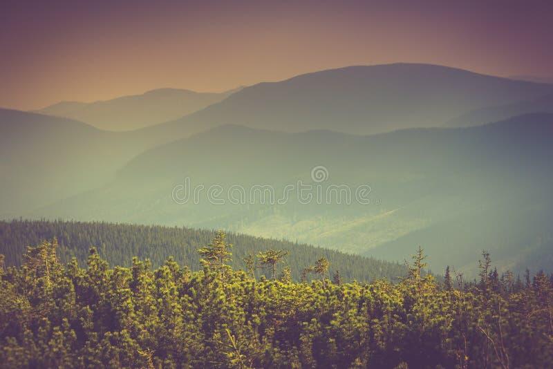 Ландшафт холмов туманной горы покрытых лесом стоковые изображения