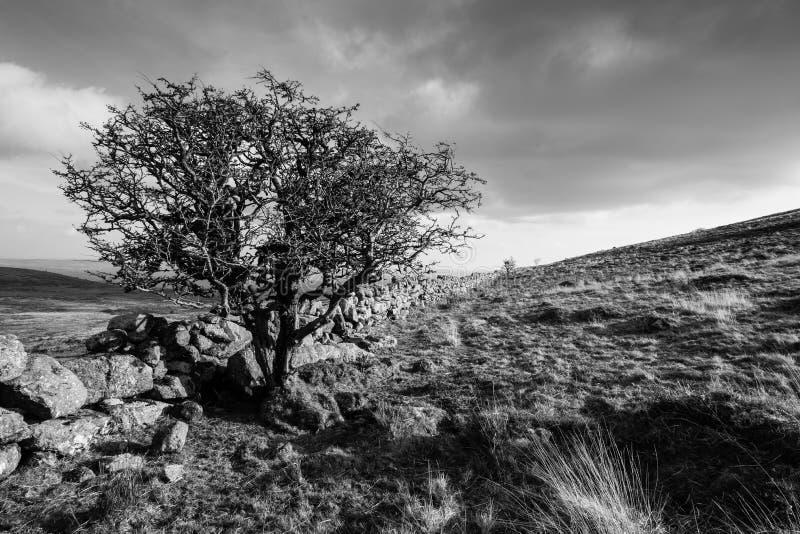 Ландшафт Dartmoor черно-белый стоковые фотографии rf