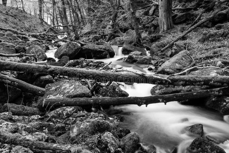 Ландшафт Dartmoor черно-белый стоковое фото