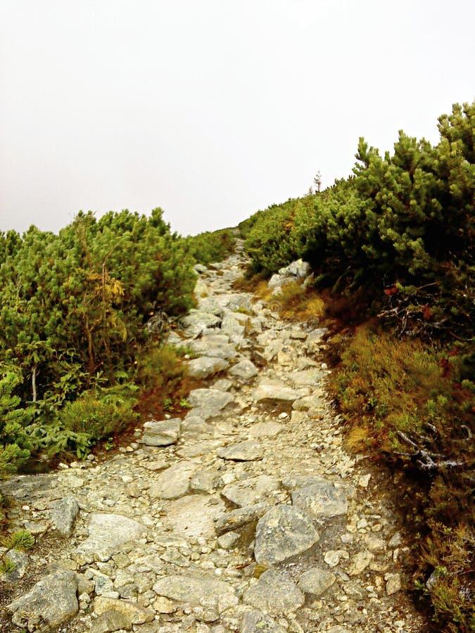 Ландшафт Krivaň стоковое фото