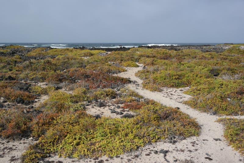 Ландшафт Orzola, Лансароте, остров canarias стоковые фотографии rf