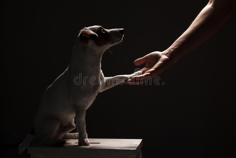 Лапка собаки принимает человека стоковое фото