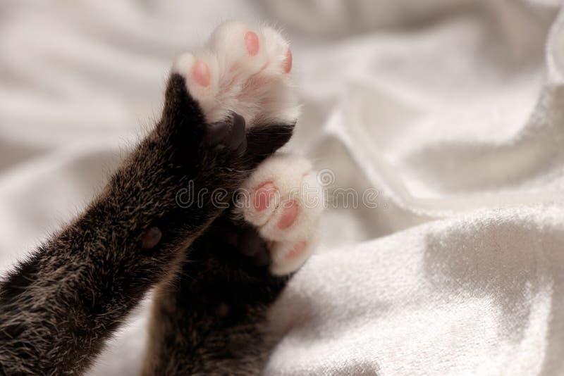 Лапки котят на белой сатинировке стоковое фото
