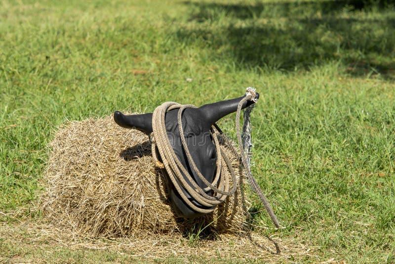 Лассо тренировки стоковое фото