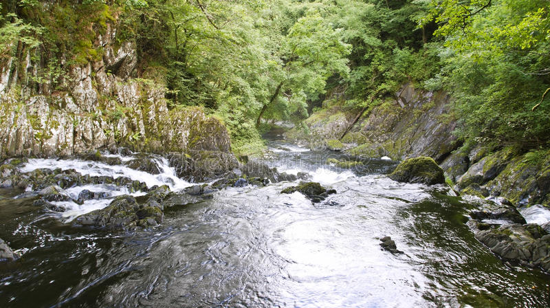 Ласточка падает около Betws-y-coed, вэльса стоковые изображения