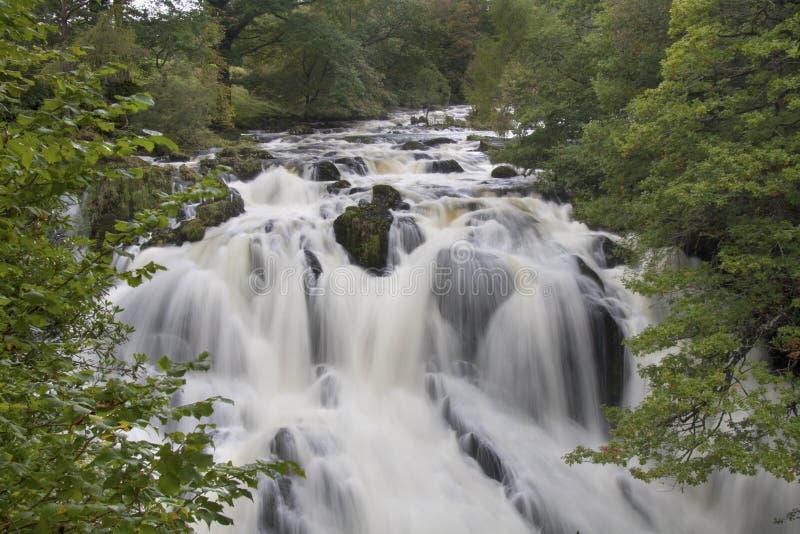 Ласточка падает, coed Betwys y, Уэльс стоковые изображения rf