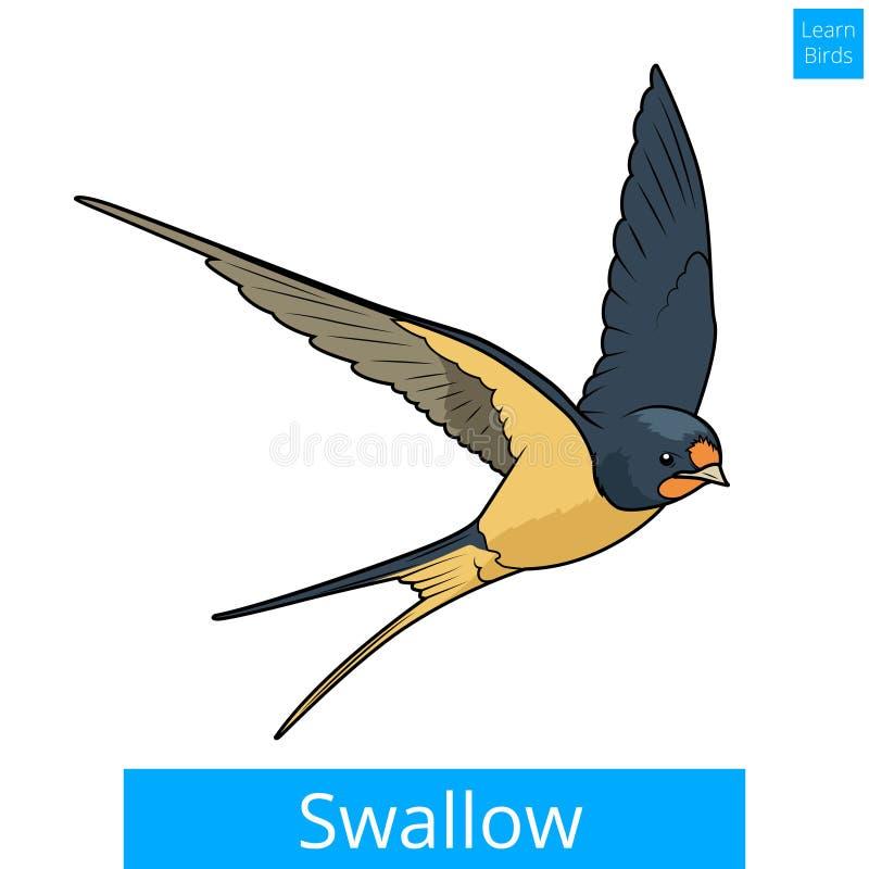 Ласточка учит вектор игры птиц воспитательный иллюстрация штока