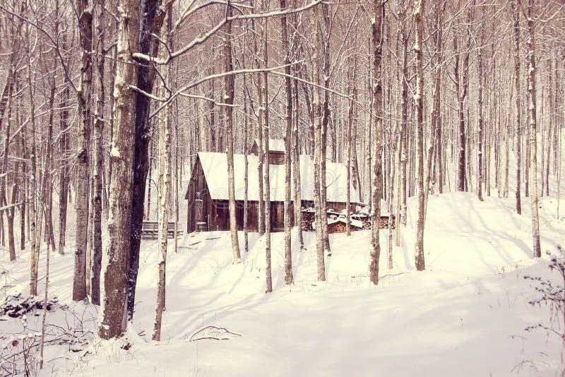 Лачуга сахара в снежном лесе стоковое фото rf