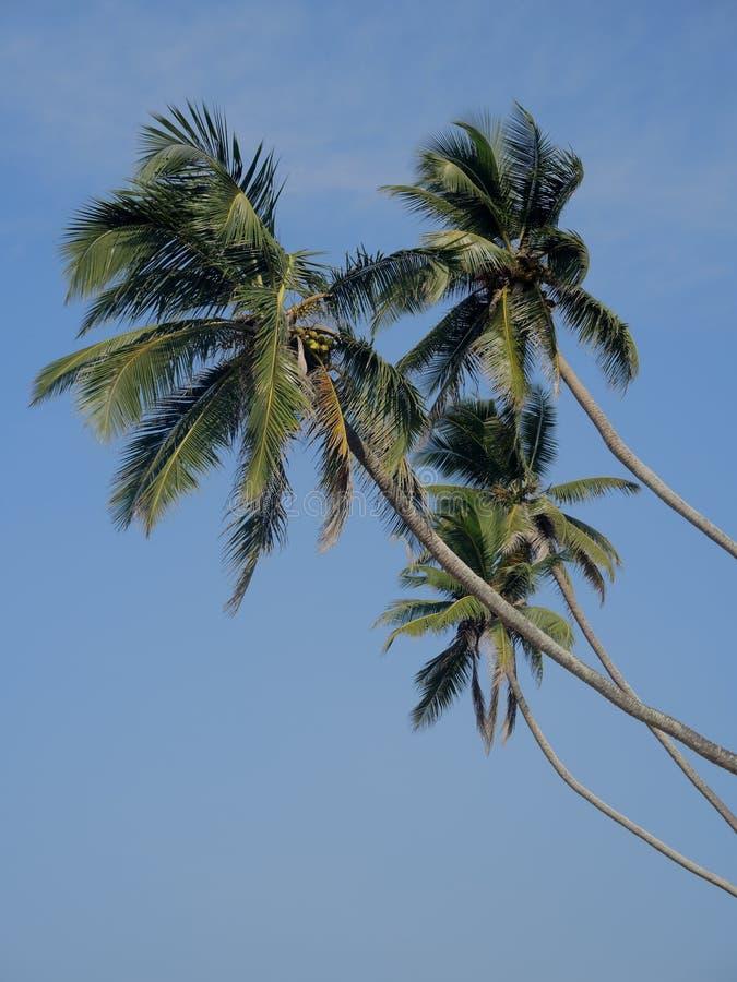 Ладони кокоса в небе стоковые изображения rf
