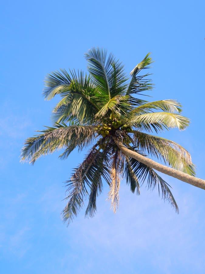 Ладони кокоса в небе стоковое фото rf