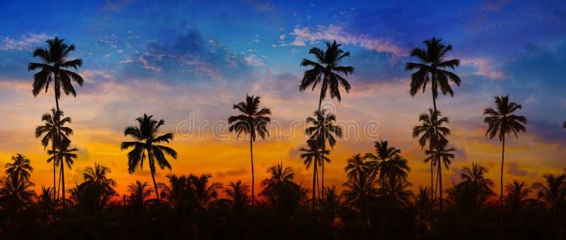 Ладони кокоса Silhouetted против неба захода солнца в Таиланде стоковое изображение