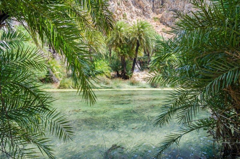 Ладони около Green River в Preveli, острове Крита, Греции стоковые фотографии rf