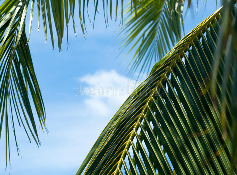 Ладонь выходит принимать удовольствие солнца и голубого неба стоковое изображение