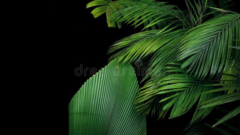 Ладонь выходит, тропический завод растя в одичалое на черное backgro стоковая фотография rf