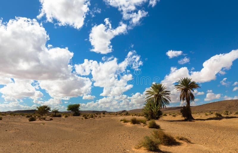Ладонь в оазисе Марокко пустыни стоковое фото