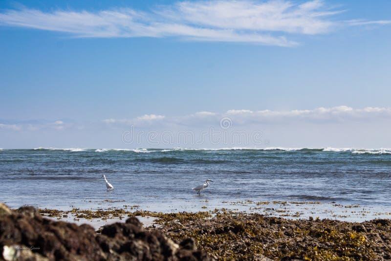 Ла Lancha пляжа стоковое изображение