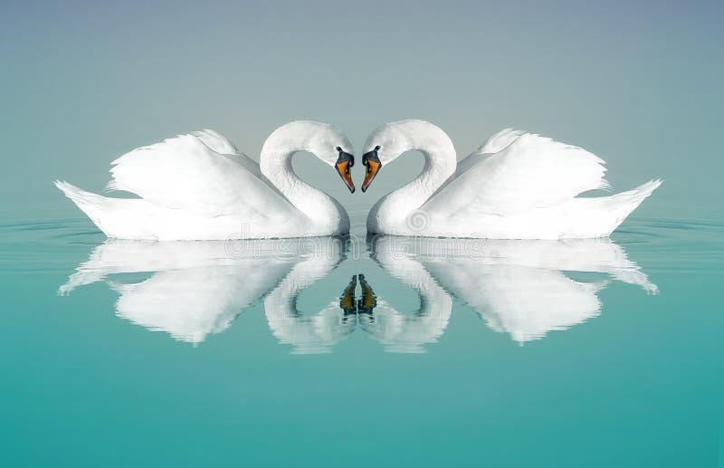 лебеди 2 стоковое изображение