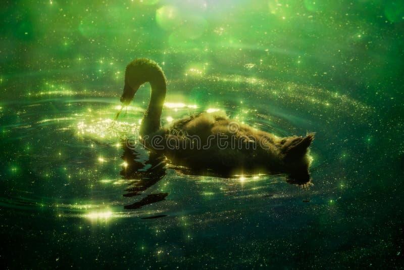 Лебедь в красочном зеленом отражении с bokeh стоковые изображения