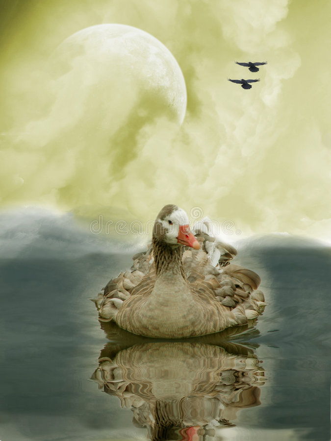лебедь иллюстрация штока
