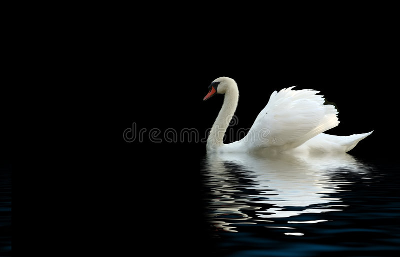 лебедь стоковая фотография