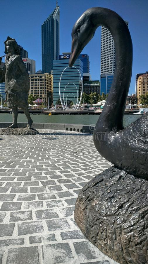 Лебедь набережной Элизабета стоковая фотография