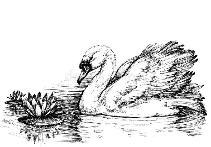 Лебедь на профиле озера иллюстрация штока