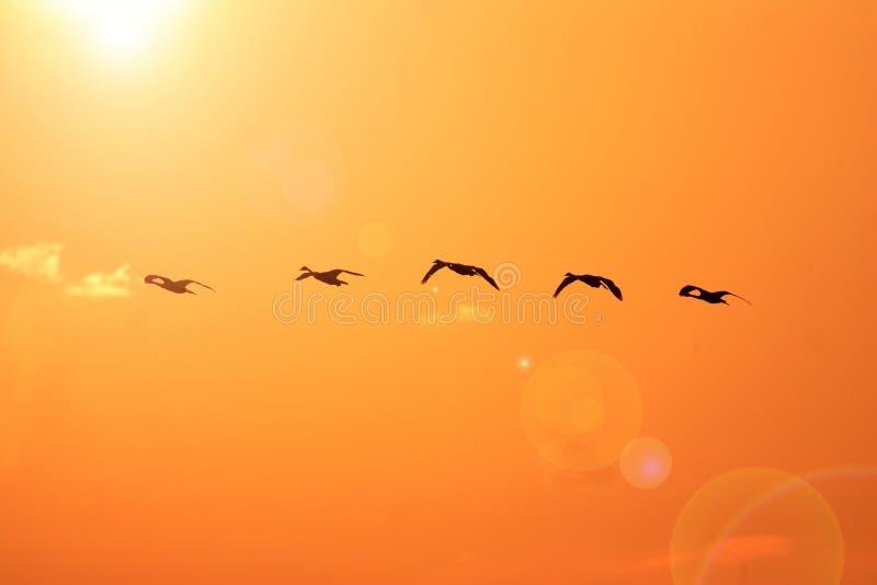 Download Лебедь тундры стоковое изображение. изображение насчитывающей естественно - 41651601