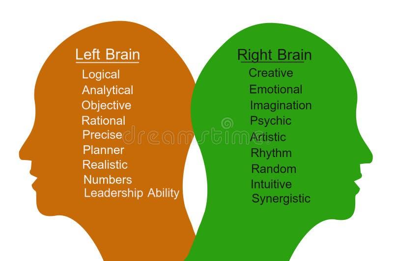 Левый мозг и правый мозг иллюстрация вектора